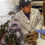 new-marine-biology-major